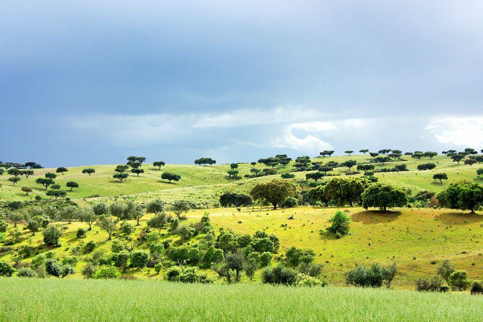 Cork oak , Meadows and Corks , Portugal