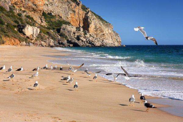 La faune et la flore, GoÈland, mer, Mouette, nature, OCEAN, Oiseau, PalmipËde, Paysage, Plage, sable, europe, portugal, animal, faune