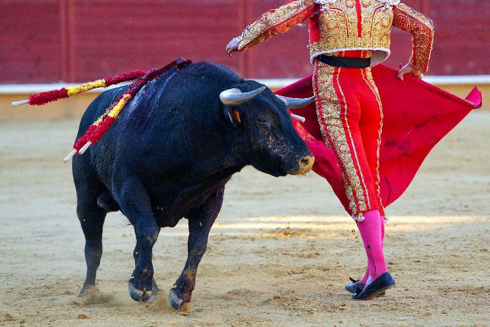 Tourada , Traditional bullfighting, Portugal , Portugal
