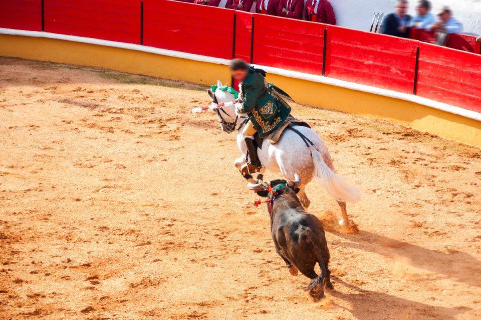 Der portugiesische Stierkampf , Tourada , Stierkampf mit Pferd in Portugal , Portugal
