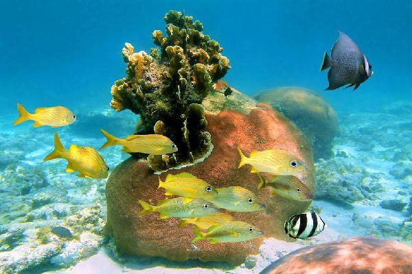 San Salvador , La isla de San Salvador , Bahamas
