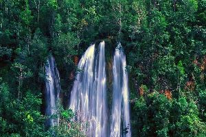 Los bosques tropicales de las cordilleras , Las selvas tropicales de las cordilleras , República Dominicana