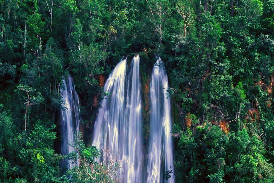 Tropical forest on the cordilleras , The tropical forests of the cordilleras , Dominican Republic