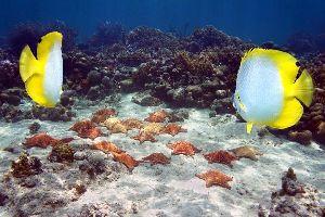 Inagua , El distrito de Inagua , Bahamas