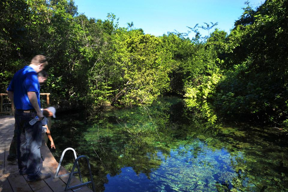 Costa Verde , A freshwater spring at the Punta Cana Resort , Dominican Republic