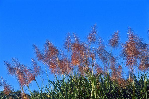 Una flora rica y variada, 8.000 especies de plantas tropicales, Fauna y flora, República Dominicana