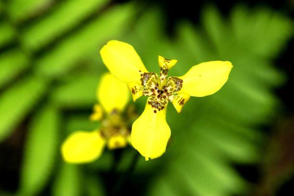 Una flora extremadamente rica, 8.000 especies de plantas tropicales, Fauna y flora, República Dominicana