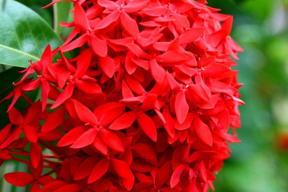 La faune et la flore, Flore République Dominicaine Caraïbes