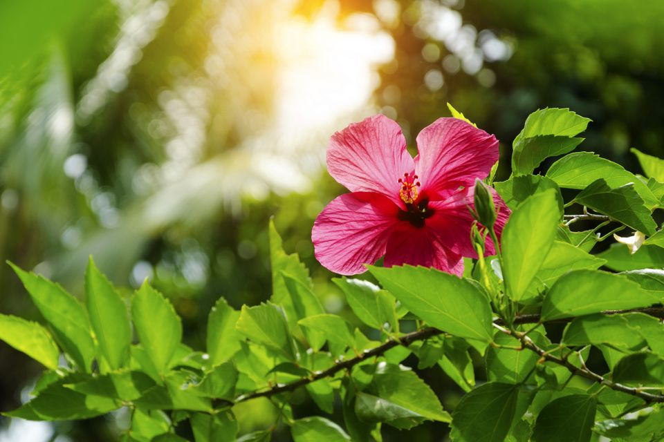 Dazzling colours, Tropical plant species, The fauna and flora, Dominican Republic