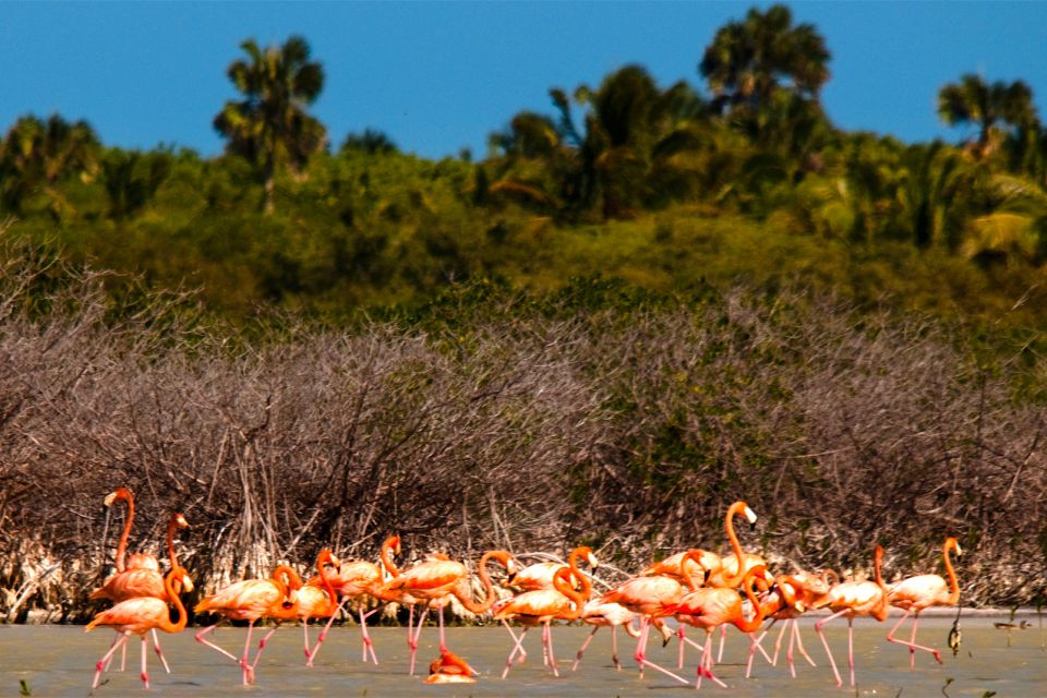 Cabrotis Island, Wildlife on land, The fauna and flora, Dominican Republic