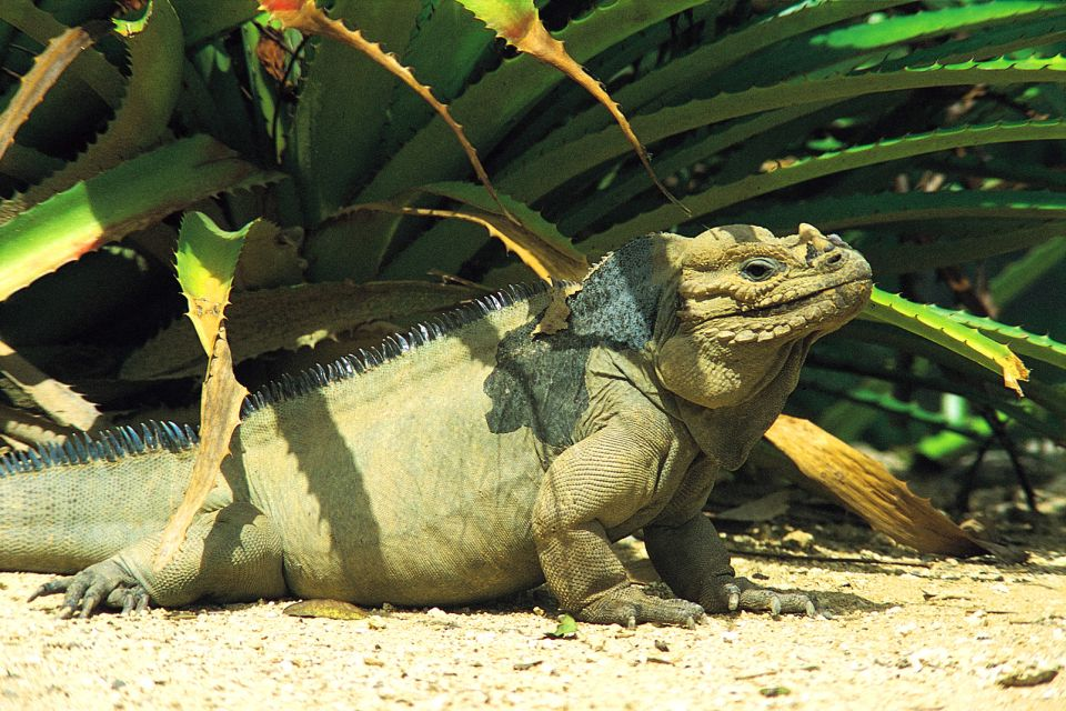 The rhinoceros iguana, Wildlife on land, The fauna and flora, Dominican Republic