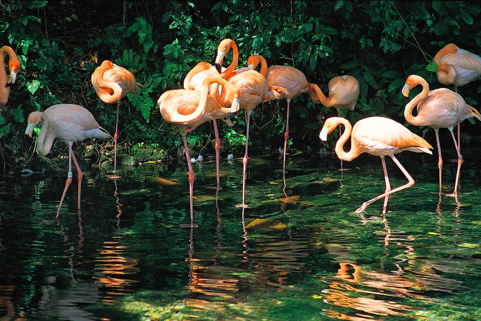 Pink flamingos, Wildlife on land, The fauna and flora, Dominican Republic