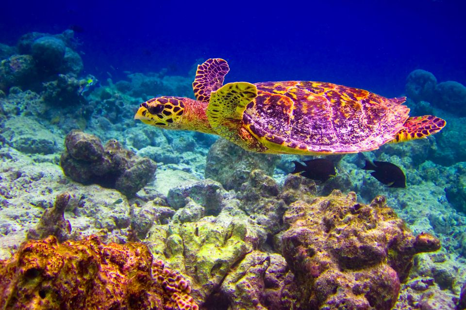 Sea turtles, Marine life, The fauna and flora, Dominican Republic