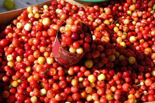 El mercado cubierto, Mercado Modelo , Un mercado de colores , República Dominicana