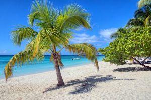 Les îles et les plages, République dominicaine, Antilles, Caraïbes, isla Saona, ile, saona, mer, plage, palmier, flore