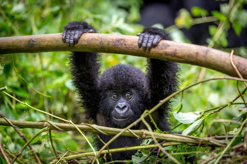 Il parco nazionale di Virunga, I paesaggi, Repubblica democratica del Congo