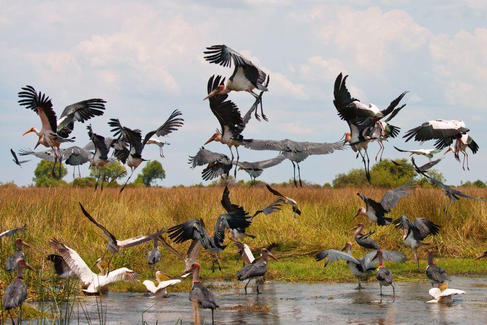 , El lago Idi Amin Dada, Las costas, República Democrática del Congo
