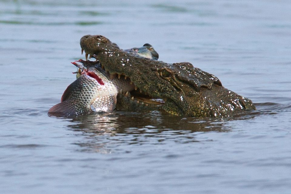 El lago Idi Amin Dada, Las costas, República Democrática del Congo