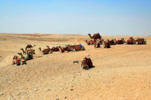 Les paysages, Une caravane de chameaux est au repos en plein soleil.