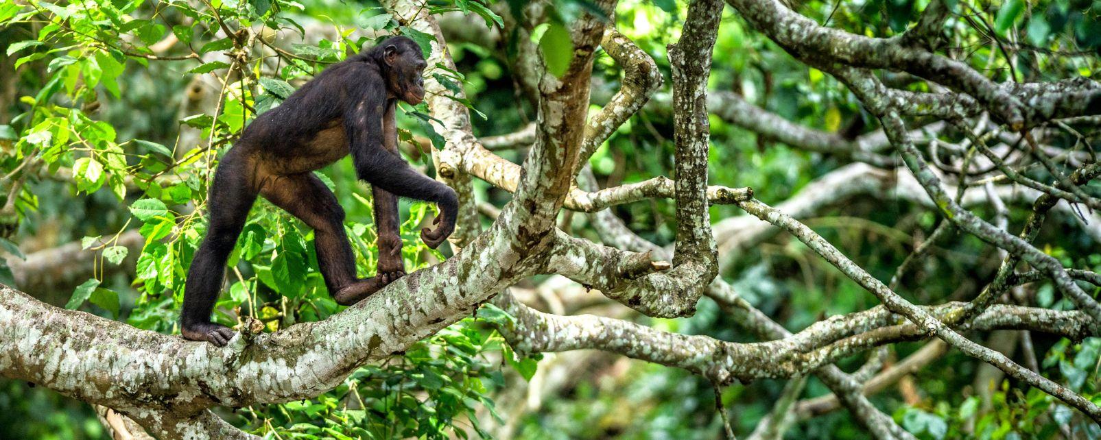 , La flora, La fauna e la flora, Repubblica democratica del Congo