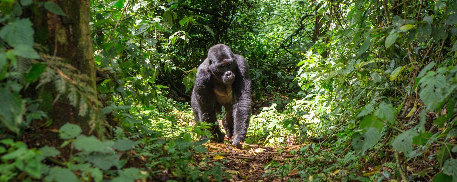 La fauna, Fauna y flora, República Democrática del Congo