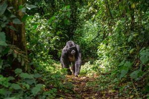 La fauna , República Democrática del Congo