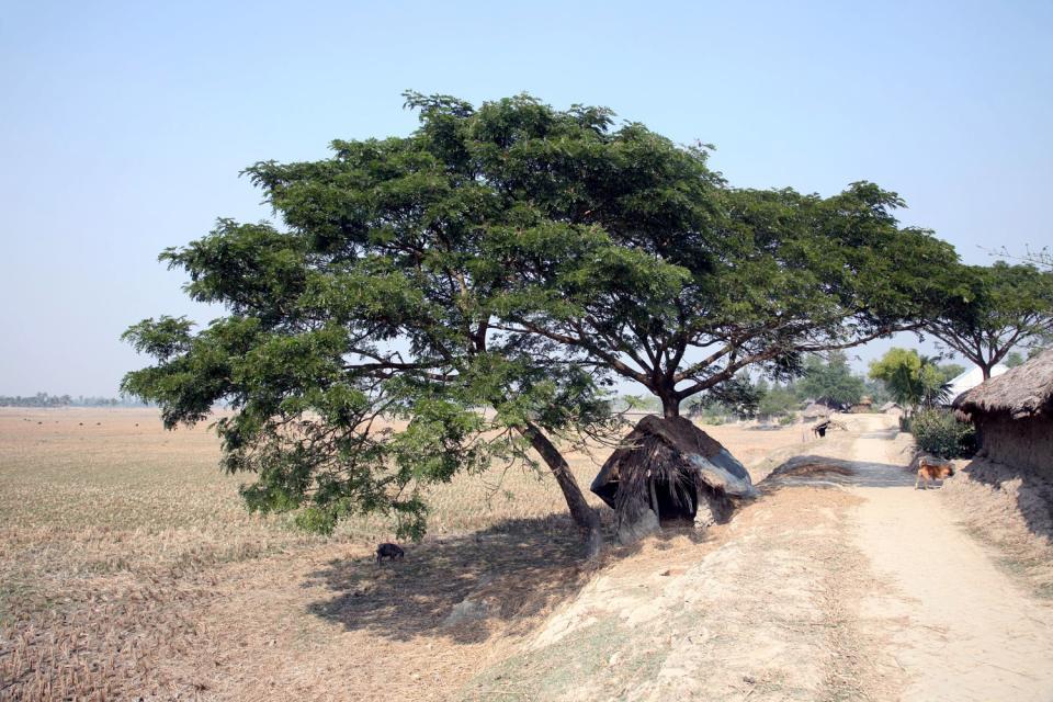La région des Sundarbans , Bangladesh