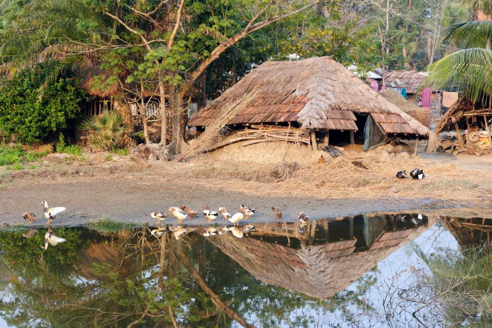 La région des Sundarbans , La forêt Sundarbans, Bangladesh , Bangladesh