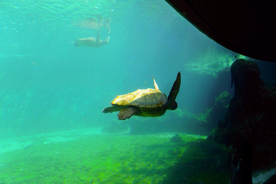 Les côtes, Ile, la réunion, océan indien, saint-leu, leu, océan, nature, kélonia, tortue, faune