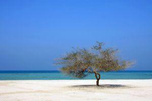 Les paysages, Bahrein, bahrain, golfe persique, moyen-orient, désert, île