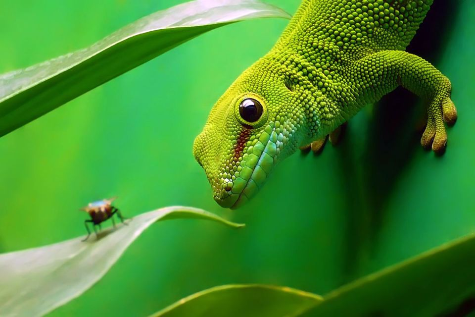 gecko, faune, Réunion; océan indien; lézard;