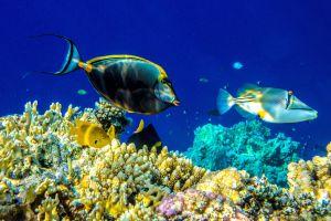 La faune marine , Réunion