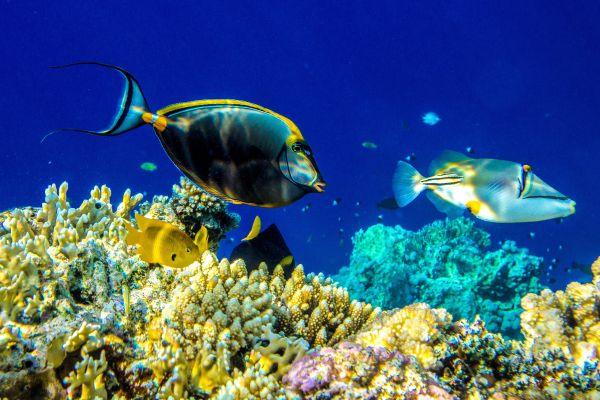 La fauna marina, La fauna marine, Fauna y flora, Reunión