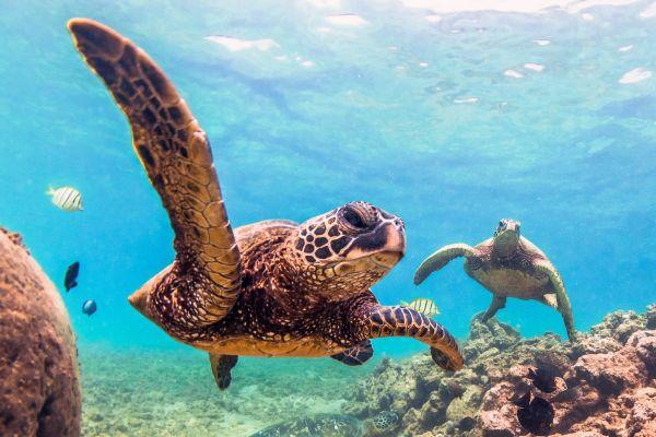 Submarinismo, La fauna marine, Fauna y flora, Reunión