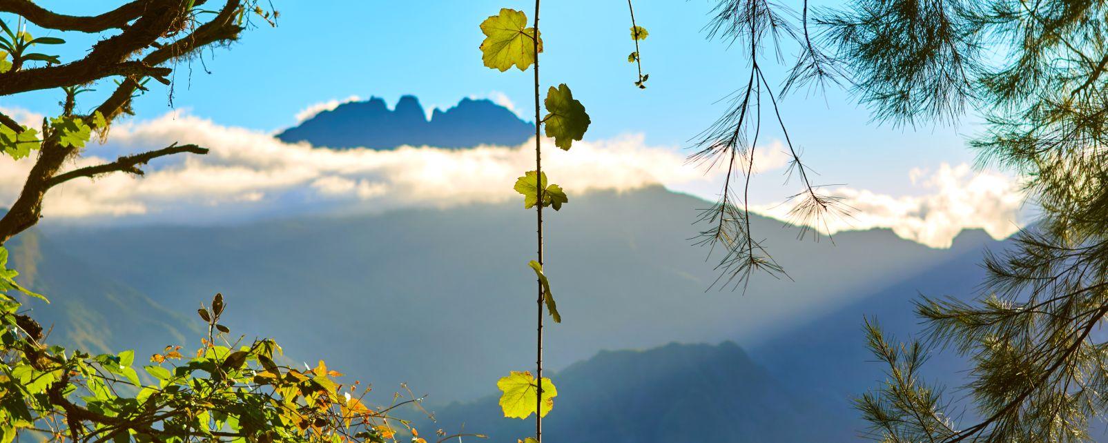 La flora della Réunion, La flora, La fauna e la flora, La Riunione