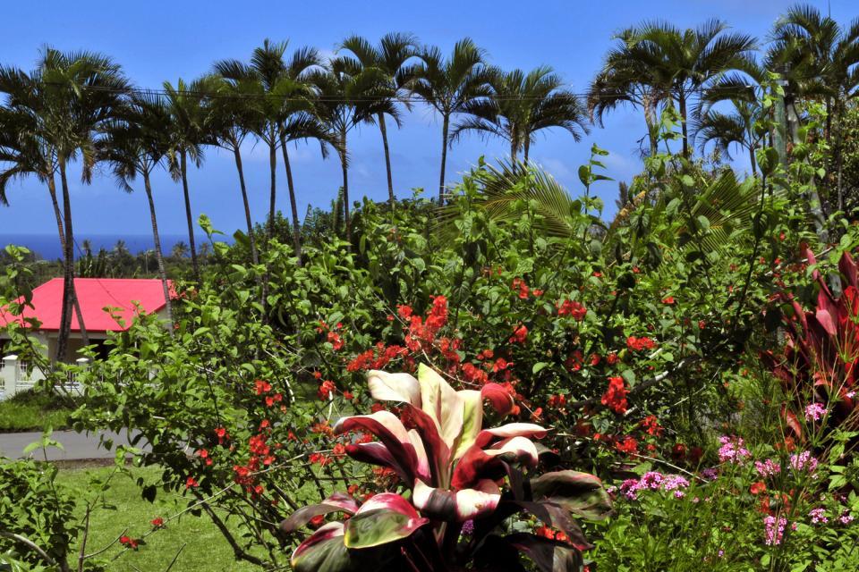 La flore , La Réunion au patrimoine mondial , Réunion