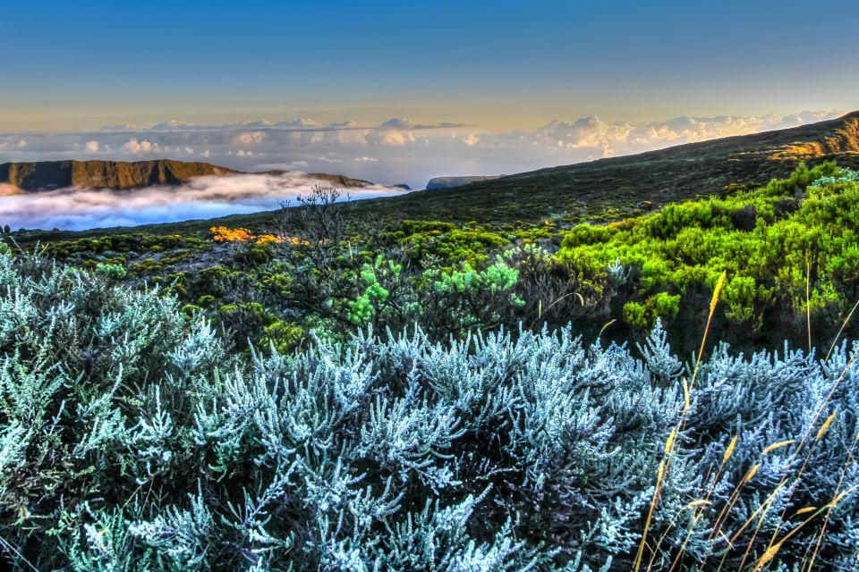 Die endemische Vegetation der Hochebenen, Die endemische Vegetation der Hochebenen ?Hauts?, Die Fauna und Flora, Réunion