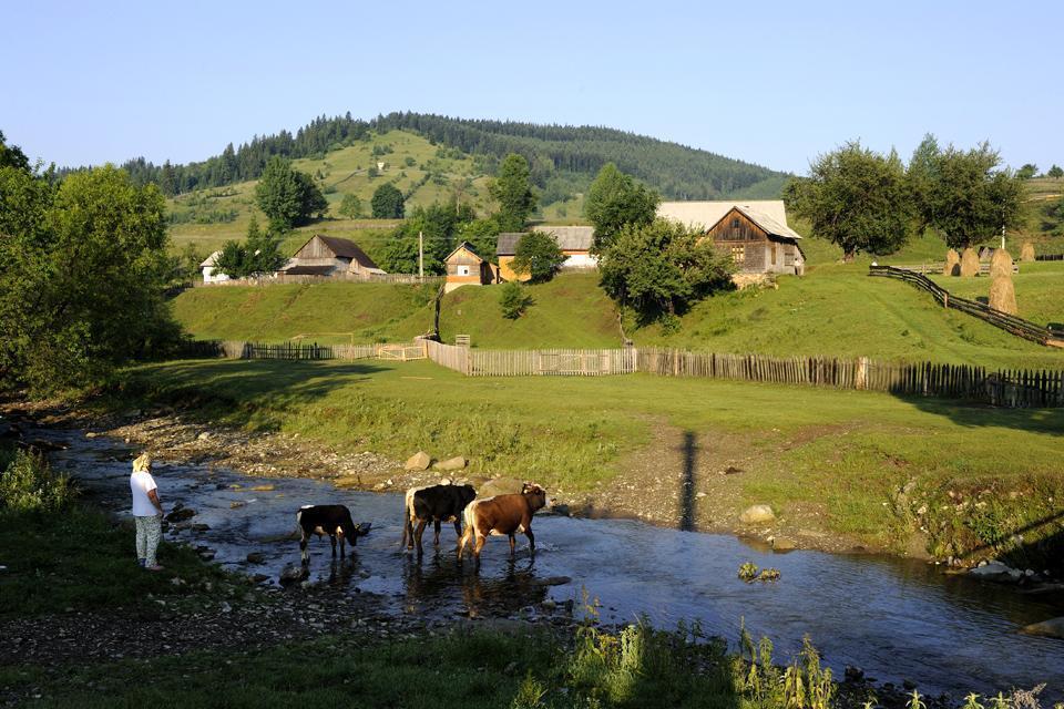 La Bucovine , Roumanie