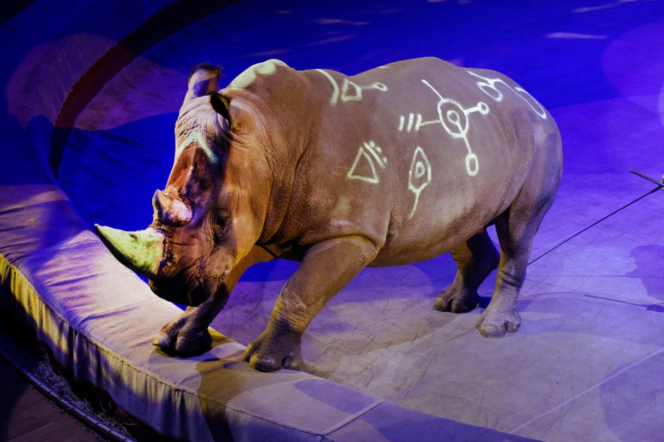 The Moscow circuses, Circuses, Activities and leisure, Moscow, Moscow and central Russia