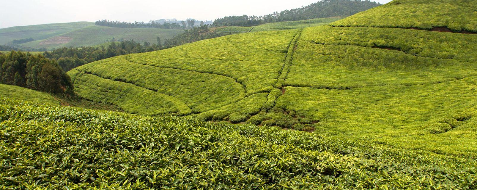 Cyangugu , Rwanda