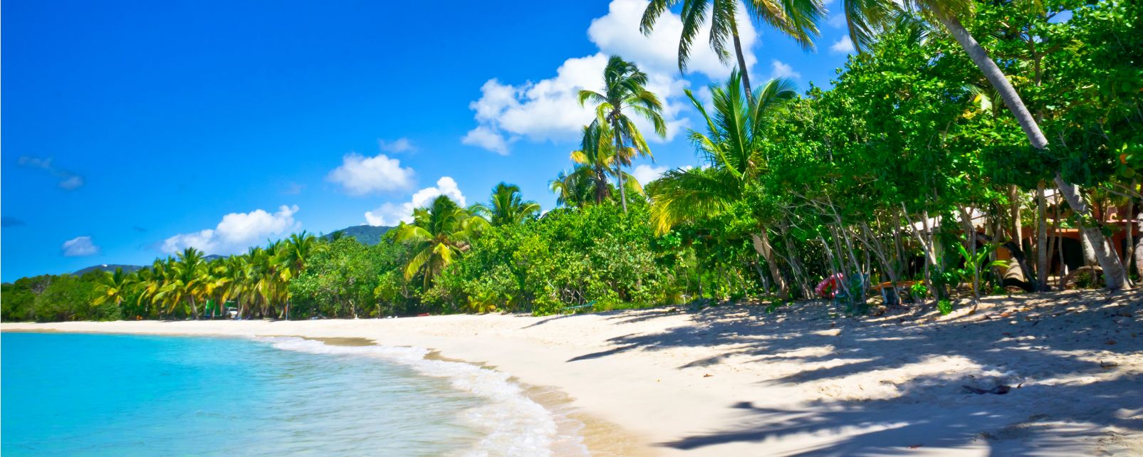 The flora, Flora, The fauna and flora, St Lucia