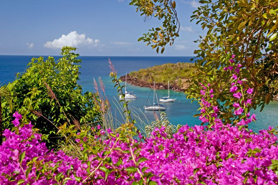 , Flora, The fauna and flora, St Lucia