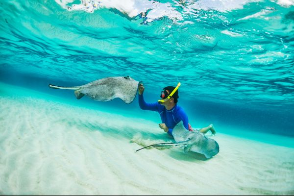 , Underwater wildlife, The fauna and flora, St Lucia