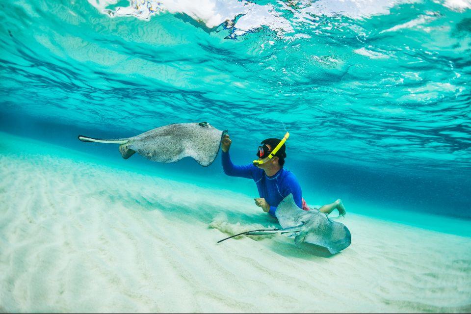 , La vida submarina, Fauna y flora, Santa Lucía