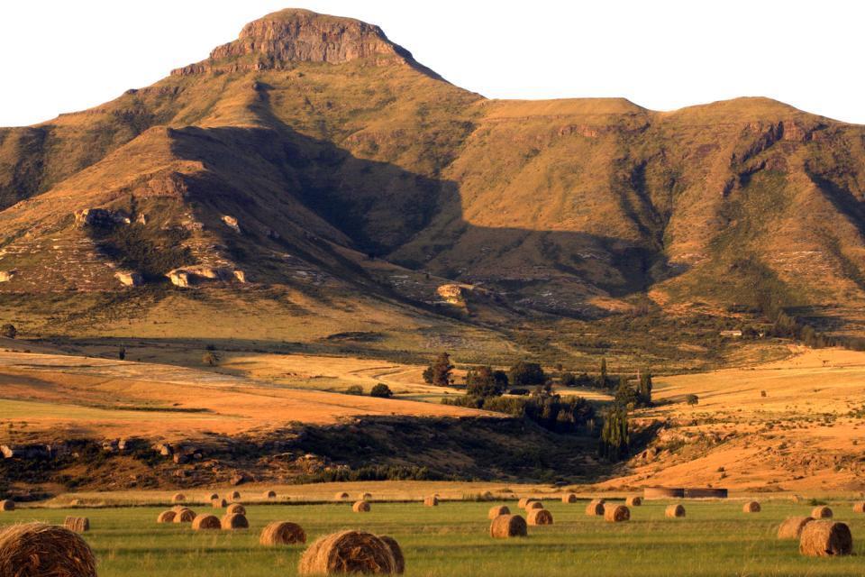 Le Free State , L'agriculture du Free State , Afrique du Sud