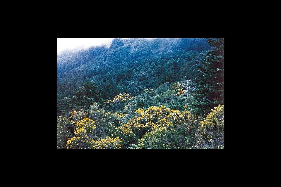 El Parque Nacional Monte Cristo , El parque nacional de Monte Cristo , El Salvador
