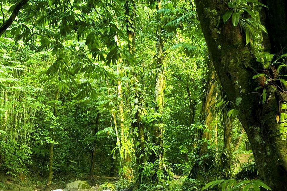 La jungle , São Tomé et Principe