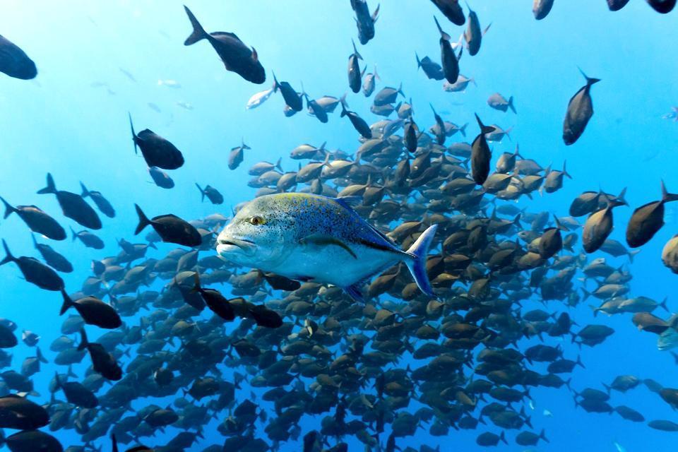 La faune sous-marine , São Tomé et Principe