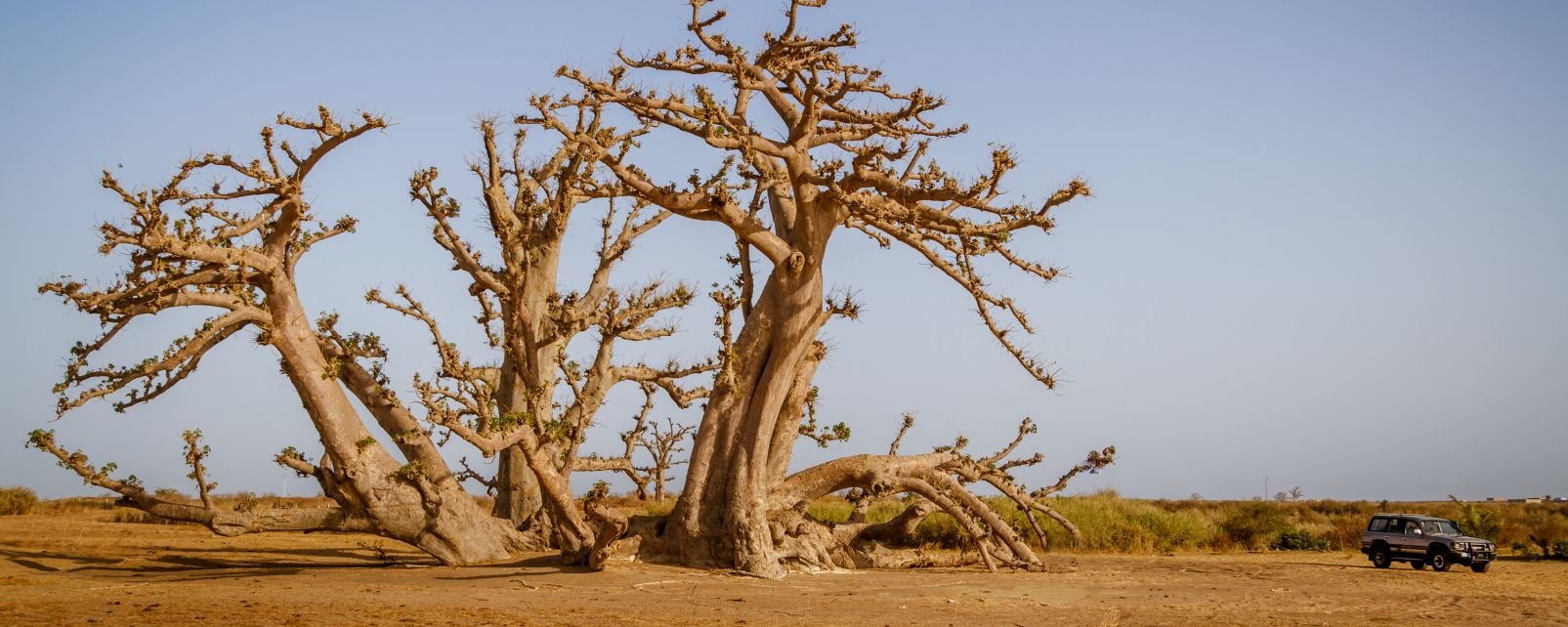 Die Ferlo-Wüste, Die Wüste Ferlo, Die Landschaften, Senegal