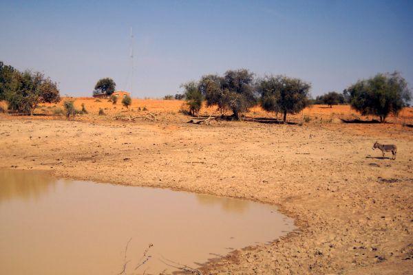 Les paysages, Sénégal, désert, ferlo, afrique, louga, acacia, ane, mammifère, faune